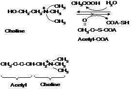 Fig.1jpg