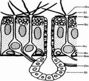 inverse micelle